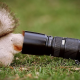 squirrel, closeup, camera, animals, grass, olimpus wallpaper