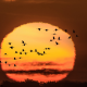 lake der-chantecoq, france, crane migration, sun, birds, animals, nature, sunset wallpaper