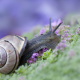 animals, macro, snail wallpaper