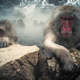 japanese macaque, snow monkey, lake, monkey, animals, jigokudani, hotspring, nagano, japan wallpaper