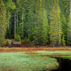 oregon, mount hood, forest, pine, tree, swamp, house, grass, nature wallpaper