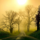 nature, road, mist, grass, tree, morning, fence, sunlight wallpaper
