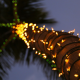 palm, trunk, lights, tropical, christmas, new year wallpaper