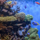 underwater, coral, reef, fish, nature wallpaper