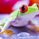 red-eyed tree frog, frog, animals, eyes wallpaper