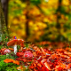 edible mushroom, forest, mushroom, autumn, tree, leaf wallpaper