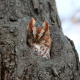 nature, animals, birds, owls, trees, depth of field wallpaper