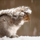 snow, winter, squirrel, animals wallpaper