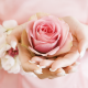 flowers, rose, hands, pink rose, bud, petals wallpaper