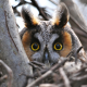 macro, owl, bird, animals, eyes wallpaper