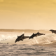jumping dolphins, dolphin, wave, sea, ocean, water splash, playful, ocean, animals, nature wallpaper