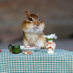 chipmunk, animals, breakfast, nuts, fun wallpaper