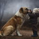 dog, children, kid, chlidren, forest wallpaper