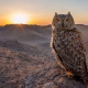 bird, owl, sun, sun rays, yellow eyes, sky, animals wallpaper