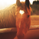 horse, closeups, blurred, sunlight wallpaper