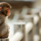 monkey, cold, animals, cute monkey wallpaper