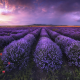 flowers, field, bulgaria, lavender, clouds, nature wallpaper