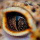reptile, eye, close up, animals, crocodile wallpaper