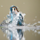 water, kingfisher, bird, wet feathers, spray, animals wallpaper