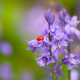 bells, flowers, ladybug, insect, macro, bokeh, nature, ladybird wallpaper