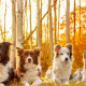 four dogs, friends, fall, autumn, animals wallpaper