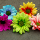 gerbera, close-up, flowers, nature, petals wallpaper