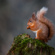 squirrel, animals, rodent, macro photo wallpaper