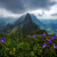 swiss alpstein, switzerland, alps, mountains, peak, clouds, nature, wild flowers wallpaper