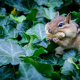 chipmunk, animal, nut, funny wallpaper