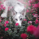 dog, animals, friend, flowers, roses wallpaper