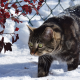 cat, snow, winter, branches, fence wallpaper