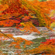autumn, forest, river, branches, nature, leaf wallpaper