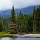 forest, spruce, nature, mountains, river, canada wallpaper