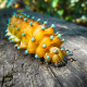 caterpillar, creeping, stick, insect, animals wallpaper