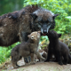 wolf, baby wolf and mom, animals wallpaper