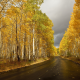 birch, road, yellow foliage, autumn, fall, leaf, nature wallpaper