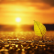 leaf, drops, sun, sunset, close-up, nature wallpaper