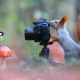 squirrel, chickadee, camera, forest, bird, animals, mushroom wallpaper