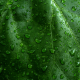 green, leaf, drops, water drops, macro, nature, close-up wallpaper