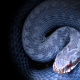 bush viper, snake, reptile, animals, scales, close-up wallpaper