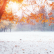winter, fall, tree, snow, autumn leaf, first snow, nature, park wallpaper