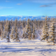 winter, snow, tree, alaska, landscape, nature wallpaper
