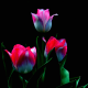 petals, nature, stem, tulips, leaves, flowers wallpaper