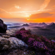 landscape, nature, mist, sunset, wildflowers, valley, forest, mountain, sky, colorful wallpaper