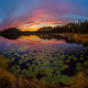 autumn, lake, water lily, sunset, twilight, grass, forest, nature wallpaper