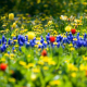 spring, flowers, beautiful, nature, tulips wallpaper