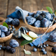 blackberry, blueberry, berry, fruits, plum, food wallpaper