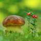 greens, berry, mushroom, nature wallpaper