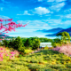 flowers, spring, tree, taiwan, sakura, mountains wallpaper
