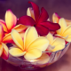 flowers, plumeria, frangipani, exotic, nature wallpaper